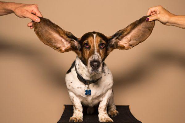 「耳から学習」って意外と簡単